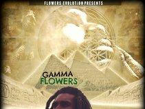 GAMMA FLOWERS