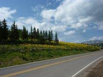 Roadside Thinking