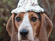 Doc Tucker & the Tin Foil Hat Coalition