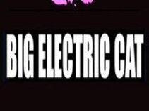 BIG ELECTRIC CAT