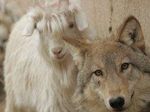 Goat Wolf