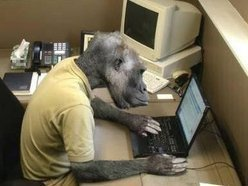 Monkey6Monkey2