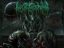 Necroexophilia