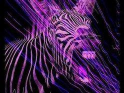 Image for Zebra