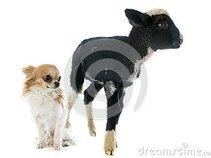 Horndog & Honeylamb