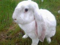 bunnylandband
