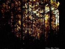 Endless Oak