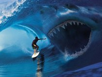 Sharkskin Vehicle