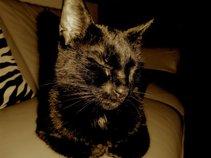 Patty The Black Cat