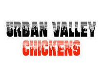 Urban Valley Chickens