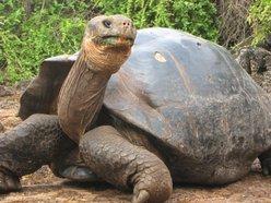 Image for Turtle Island Quartet