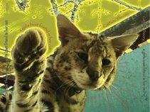 Catbox Theory