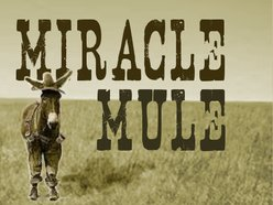 Image for Miracle Mule