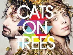 Image for Cats on Trees