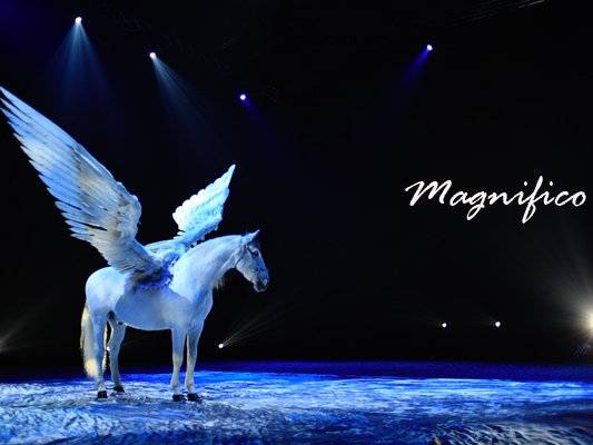 Image for Magnifico