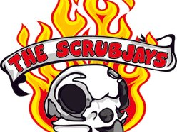 Image for The ScrubJays