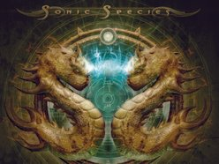 Image for Sonic Species