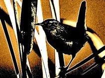 The Midnight Wrens