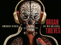 Organ Thieves