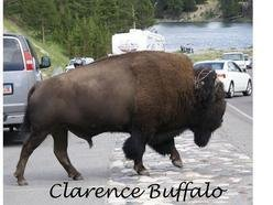 Image for Clarence Buffalo
