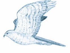 Image for Joybird