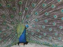 Michael Peacock