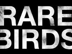 Image for Rare Birds