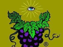 Great Glorious Grapevine