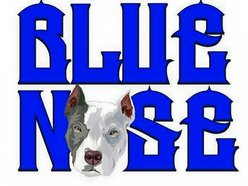 Image for Blue Nose Music