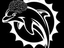 dolphinbrain