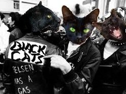Image for The Black Cats
