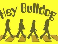 Image for Hey Bulldog