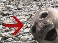 DJ MikiP aka The Happy Seal