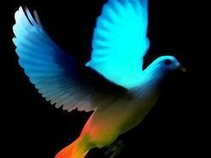 Very Pretty Pigeon