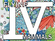 Flying Mammals