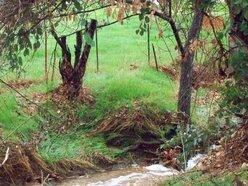 Deep Roots Grove