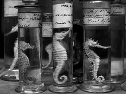 Image for The Seahorse Bandits