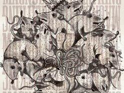 Image for Magnolia