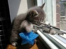 meow meow murders