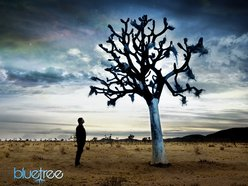 Image for Bluetree