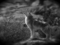 the koyotes