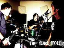 the black mollies