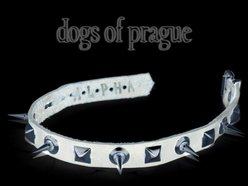 Image for Dogs of Prague