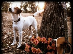 Image for The Bird Dogs Tx