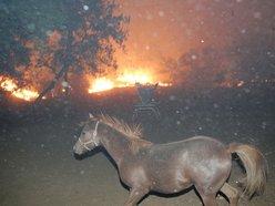 Image for Cedar Fire