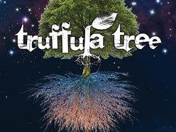 Image for Truffula Tree