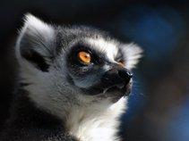 Lemurr