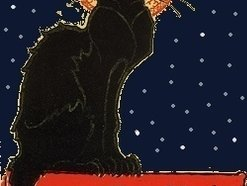 Image for Cats Under the Stars