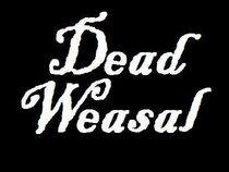 Dead Weasal