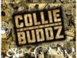 Image for Collie Buddz